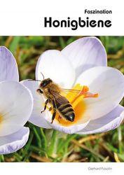 Faszination Honigbiene